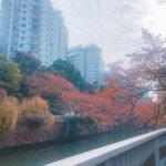 秋の目黒川。私の記憶
